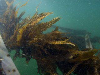 Seaweed in a healthy farmhouse